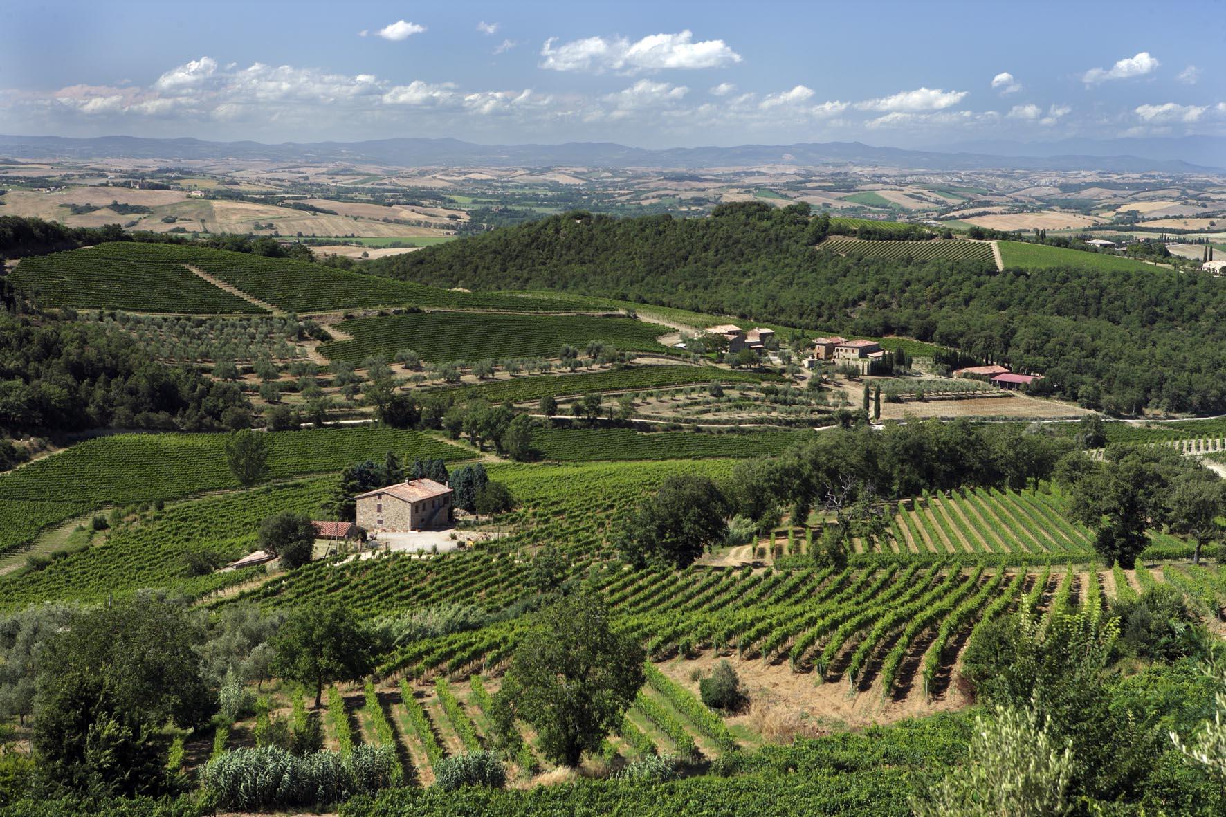 Vigne-Montalcino-4